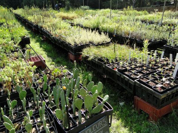 Ateliers formations de la p pini re au jardin 2015 for Jardin rayol canadel